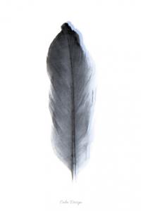 Feather – plakat - sort/blå – A4
