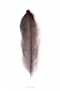 Feather – plakat - sort/rosa – A4
