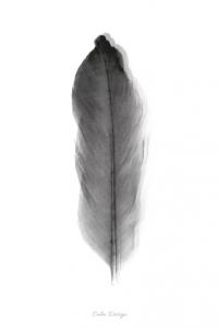 Feather – plakat - sort/hvid – A4