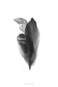 Feather Bouquet – plakat - sort/hvid – A4